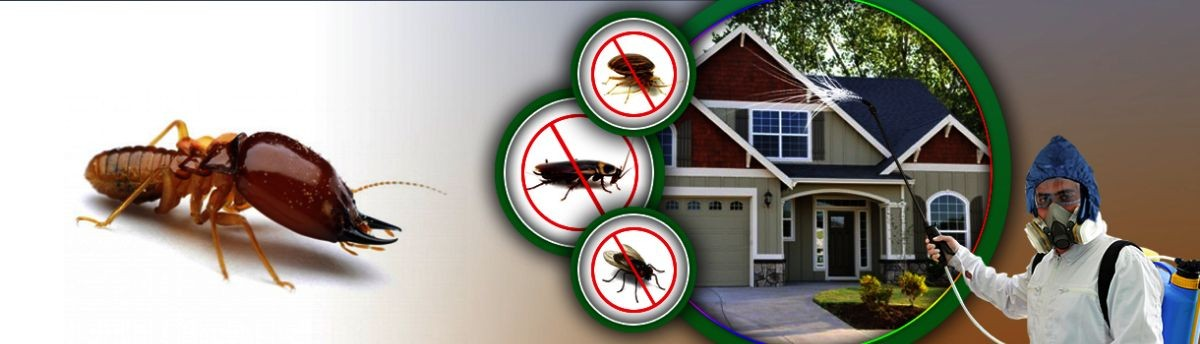Pest Control at Kolkata | Call 9804637518